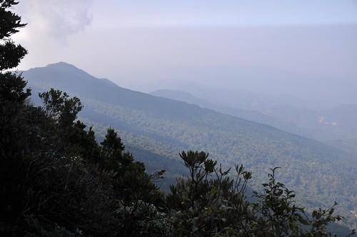 加里山-杜鵑嶺步道-杜鵑嶺觀景台