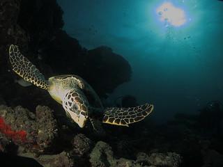 Tortuga (Maldivas)