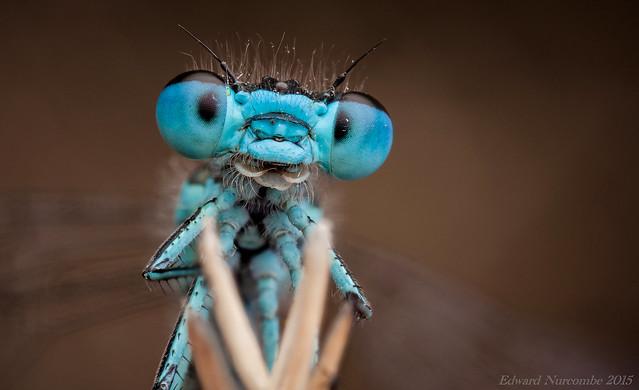 Eddie The Bugman - My Blue Heaven
