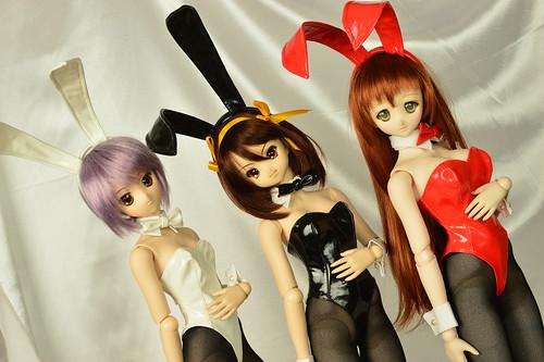 bunny025