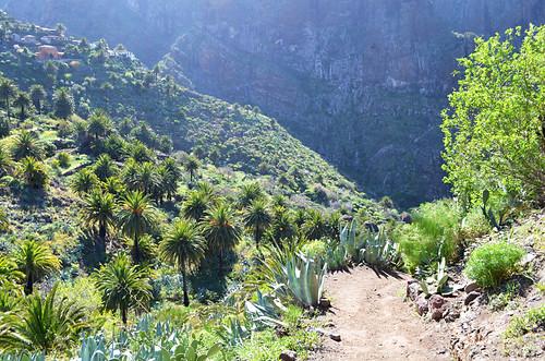 Path into Masca Barranco, Buenavista del Norte, Tenerife