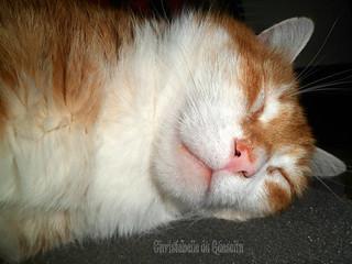 ne pas réveiller !! le chat qui dort :surtout PITCHOUNET!