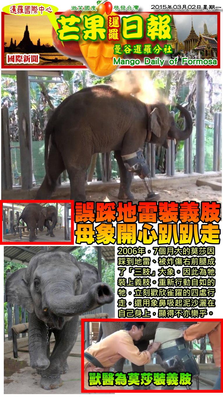150302芒果日報--國際新聞--誤踩地雷裝義肢,母象開心趴趴走