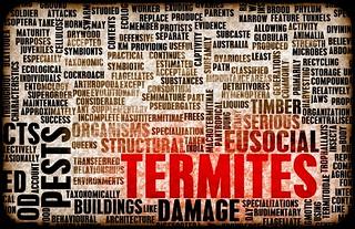 Termite pest control service billboard in Cypress texas-min