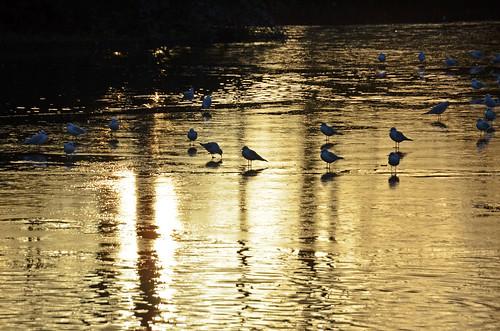 sunset sun reflection ice water utrecht seagull gull