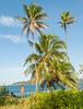 bocas del toro beach hotel tierra verde landscape