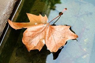 hoja flotante