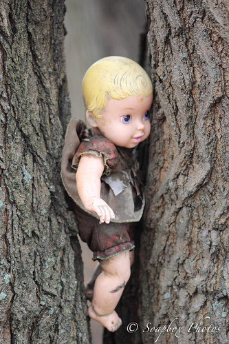 """Creepy Baby Doll in a Tree at Palmyra Cove Nature Park"""