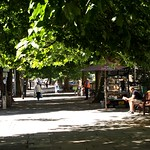 Tree lined Pavement