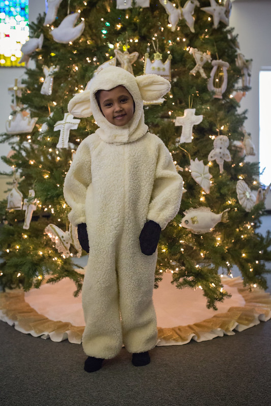 christmas pageant lamb