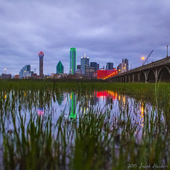 Spring Frogs in Dallas