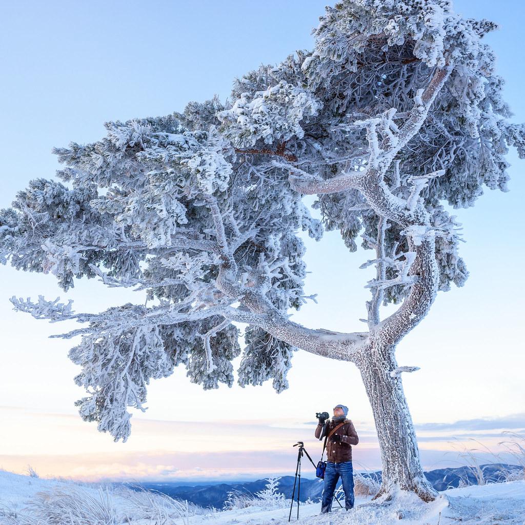茶臼山高原の霧氷 | Sony a7 + SIGMA 35mm F1.4 DG HSM Art