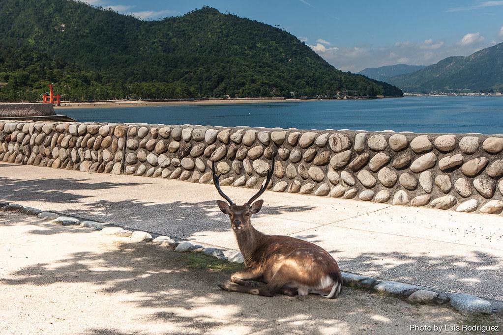 Santuario de Itsukushima-7