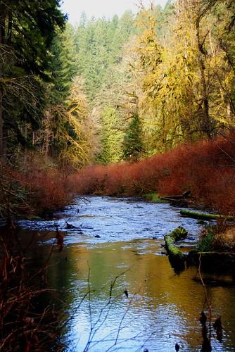 Looking Down Silver Creek