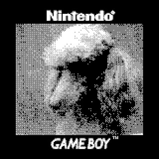 Behind the Scenes of the Westminster Kennel Club Show with @fredrconrad #dogsofinstagram #westminster #bts #dogs #dog #pup #puppy #showdog #dogshowBTS #gameboyphoto #gameboycamera #nintendo #retro #retrocollective #poodle #WKCDogShow