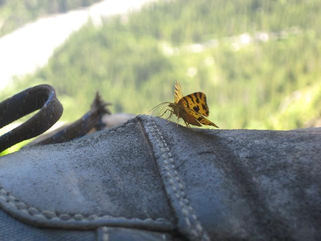 Ein Schmetterling pausiert auf meinem Wanderschuh, während ich selbst pausiere