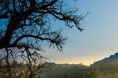 Distant hillsides