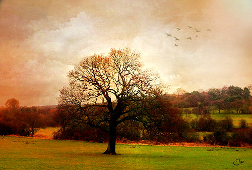 england tree rain clouds is birmingham wind song ngc shakespeare it npc textured pypehayespark