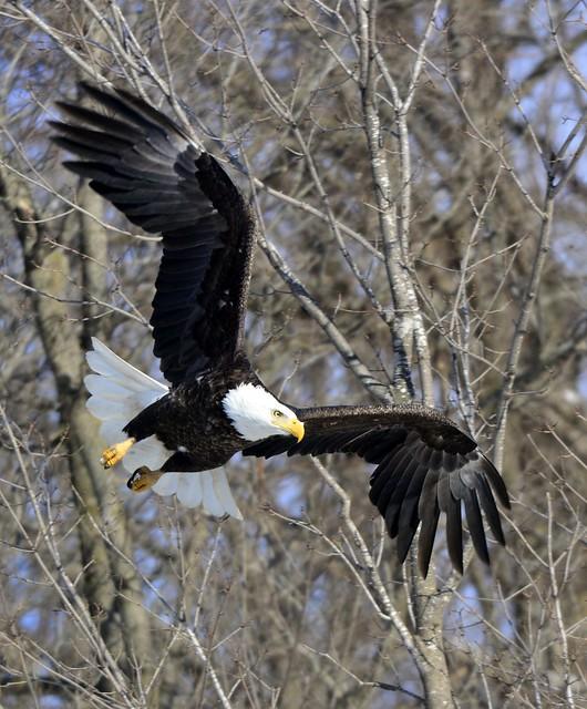 EaglesFeb262015 533-001
