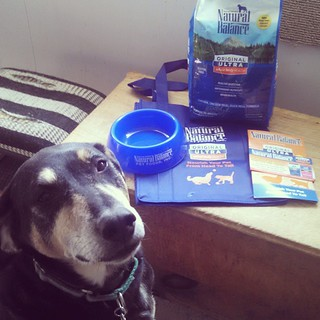 Tut says Thank You to @blogpaws and @naturalbalanceinc for the goodies he won in #BlogPaws October photo contest. His prize arrived in January, but we were a little preoccupied. Sorry! #dogstagram #dogsofinstagram #coonhoundmix