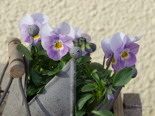 Frühlingsgruß :-)