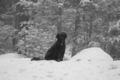 snowy suzie IMG_1930