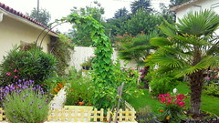 my mum's potager and garden
