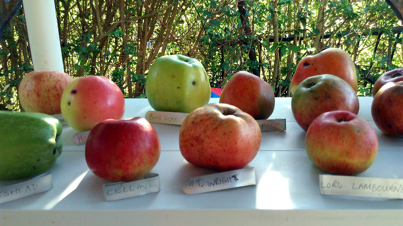 Apple day 2016-4