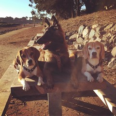 Photo from yesterday at Ft. Funston... Rush is trying to find the light! hahahaha :joy: :heart:️
