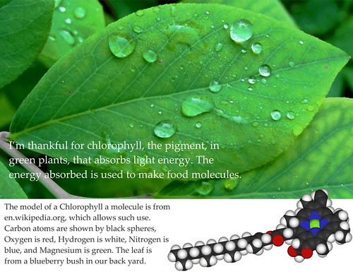 Thankful for chlorophyll