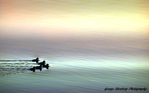 colors twilight ducks peaceful pacificnorthwest washingtonstate hoodcanal