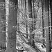 Small photo of Wald - forest