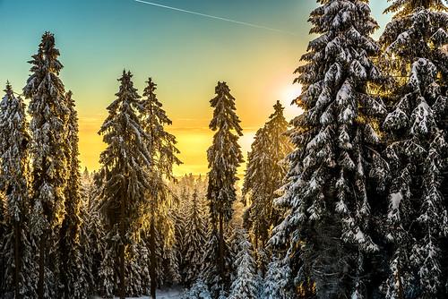 trees winter snow yellow sunrise germany nikon d610 tamron2470