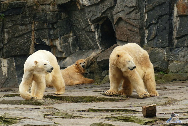 Tierpark Berlin 21.02.2015  0183