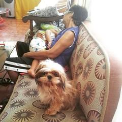 Shhh□□□ #babyJJ and MamaNene are napping□□ so, no loud chats○○ not on my watch ~ #HersheyShihTzu ♡■♡■♡  #cute #ShihTzu #pets #dogs #ShihTzuPhilippines #shihtzugram