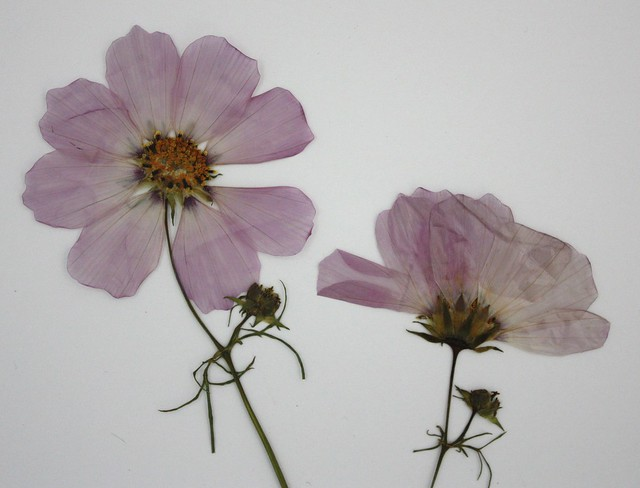 cosmos from the top and cosmos from the side