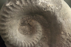 sculpture(0.0), circle(0.0), fossil(1.0), stone carving(1.0), rock(1.0),