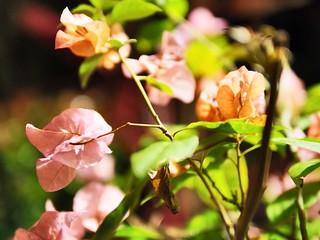 Night Time Flowers - Olympus OMD EM5 MKII/Leica 25mm F1.4