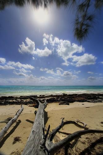 ocean beach day driftwood blueskies tropics partlycloudy planetearth grandbahamas freeportbahamas kmprestonphotography 20150211235224mc barbarybeachbahamas