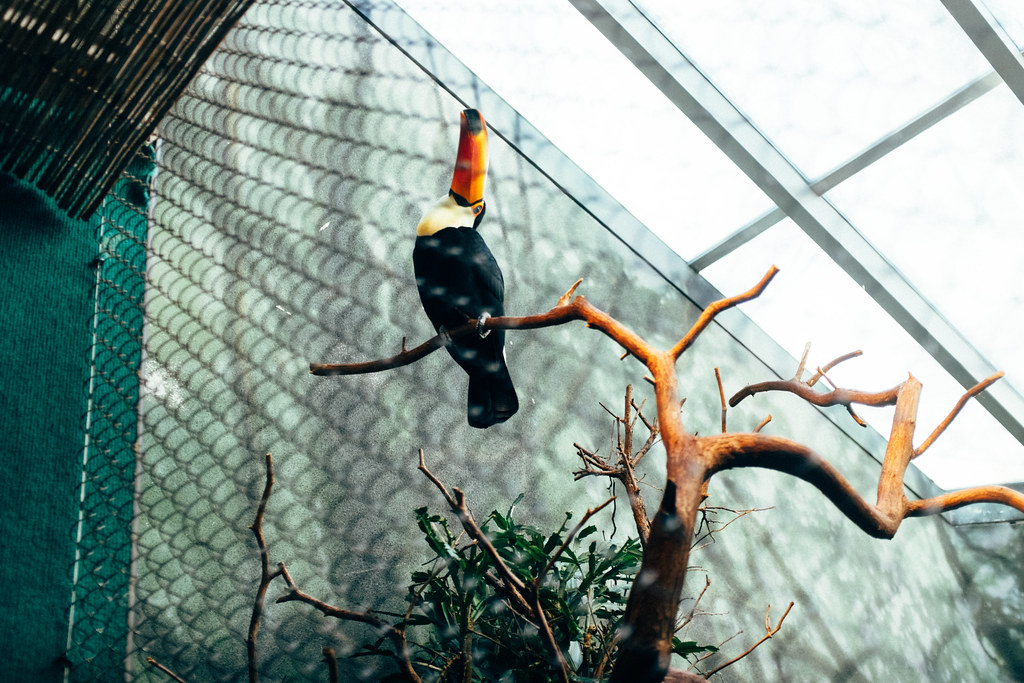 Woodland Park Zoo 03