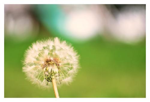 Autor: flor ragusa