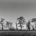 Ten Trees. by Willem Eelsing