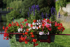 Flowers flowers everywhere