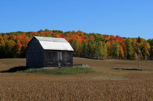 quyon québec canada autumn automne farm ferme fallcolors municipalityofpontiac pontiac northonlsow