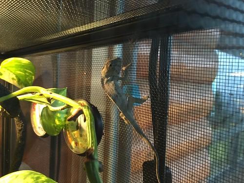 Karma the Chameleon