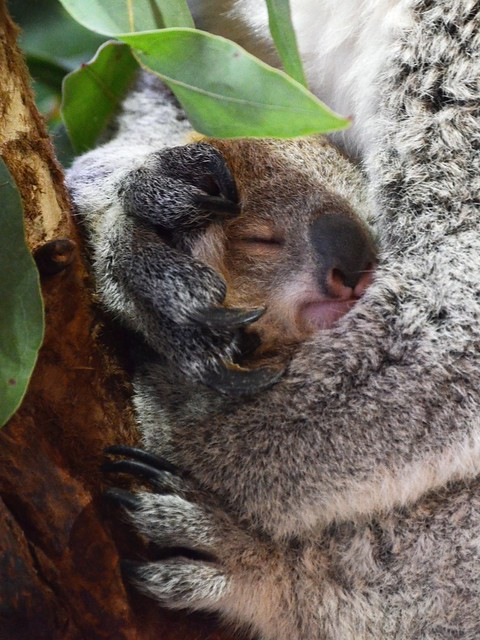 Snug Little Baby