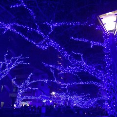 The lights, the crowds, just another canal-side event in #nakameguro