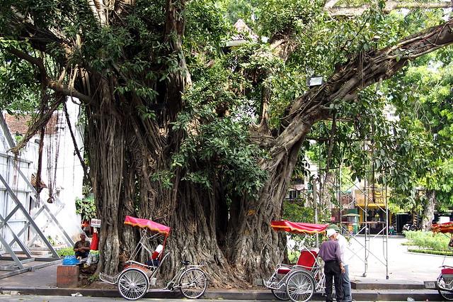 rickshaw riders, Hanoi, Vietnam