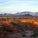 Quintessentially Arizona