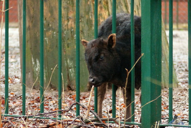 Tierpark Berlin 10.01.2014 67